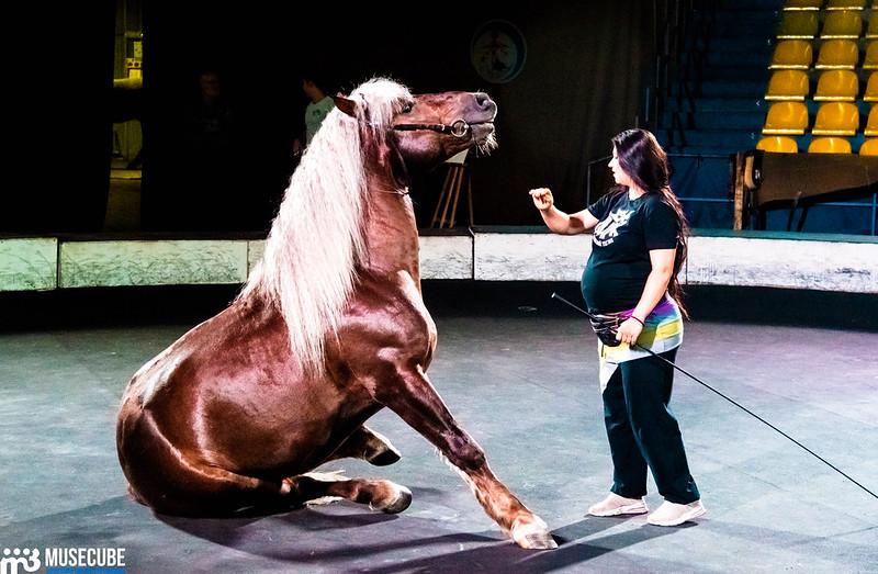 день лошади
