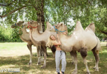 прогулка с верблюдами и собаками